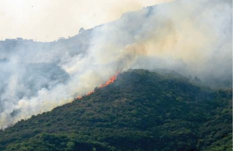 Senate body asks CDA, IWMB to jointly check fires on Margalla Hills