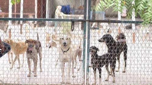 ACF returns Rs1m donation after social media backlash over putting down of two dogs in Karachi