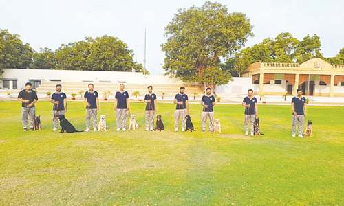Sindh police's canine unit reactivated to trace explosives, drugs