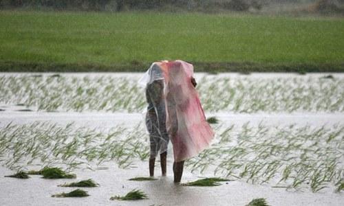 Farmers rejoice as rain spells end water scarcity