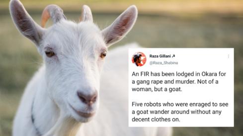 Should animals wear modest clothes too, social media asks after goat gang-raped in Okara