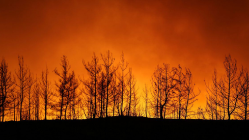 Celebrities and public figures mourn the devastation caused by the wildfires in Turkey