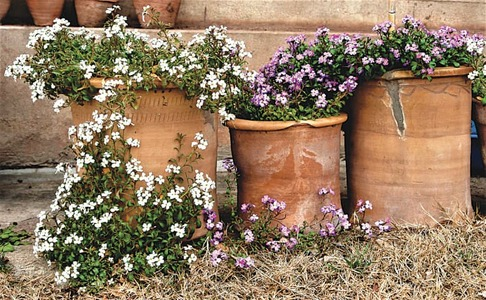 GARDENING: 'HOW DO I CHOOSE THE RIGHT POT FOR ANY PLANT?'