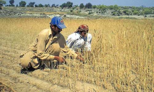 Gujrat's agricultural cost of remittances