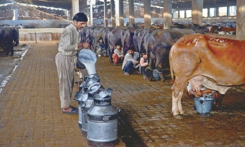Karachi commissioner told to consult dairy bodies, SFA for sale of milk at notified rate