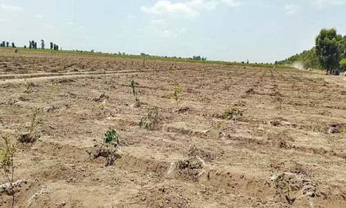 KP govt to specify part of uplift schemes for plantation