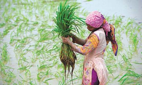 Outlining the steps needed in agriculture sector to achieve sustainable development goals