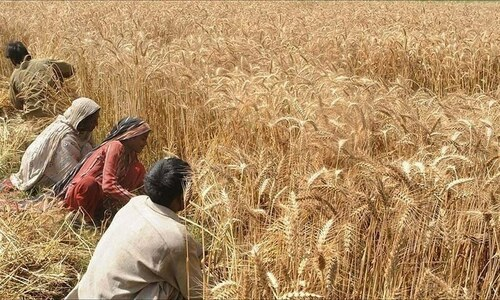 Sindh govt releases wheat, fixes price to check shortage