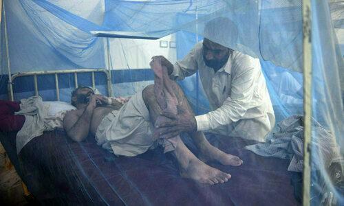 پشاور میں کووڈ 19، ڈینگی کے سب سے زیادہ کیسز رپورٹ