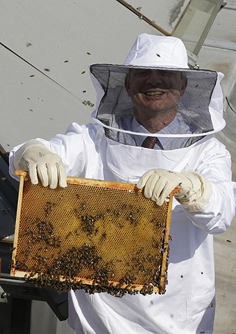 French National Assembly Speaker Claude Bartolone, wearing a protective suit, holds a frame with bees during the arrival of the bee colony for the three beehives installed on the roof of the National Assembly in Paris. The roof of France's National Assembly is ready to buzz with activity after the arrival of three large bee hives as part of a project to promote pesticide-free honey. The bees should produce up to 150 kg of honey a year and help pollinate flowering plants around the capital at a time of worldwide dec