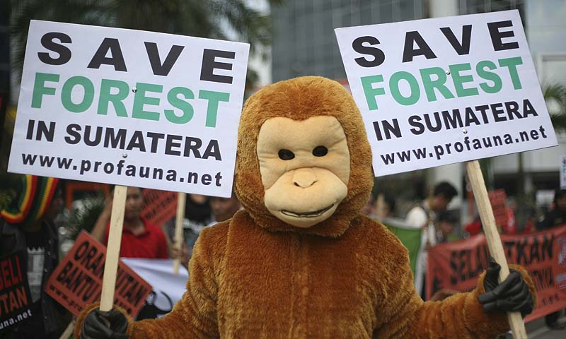 An Indonesian activist in an orangutan costume holds banners during a protest calling for protection of orangutan habitats on Sumatra island, in Medan, North Sumatra, Indonesia. Orangutan populations in Indonesia's Borneo and Sumatera island are facing severe threats from habitat loss, illegal logging, fires and poaching.—Photo by AP