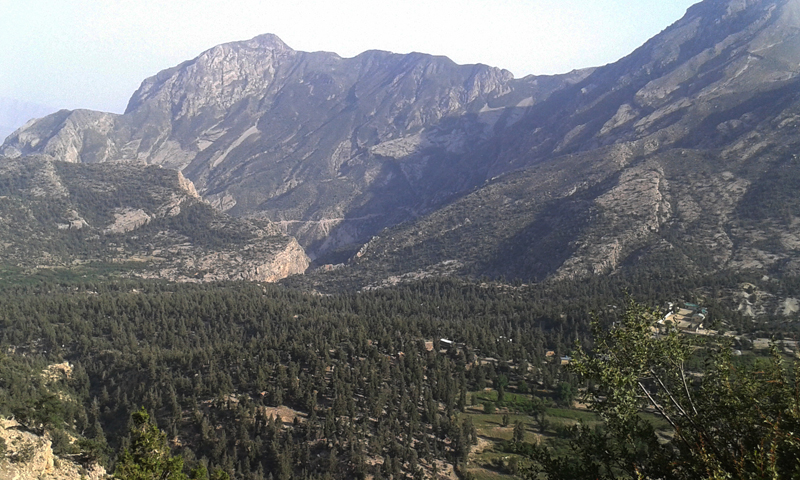 Ziarat valley's juniper forest. — Photos provided by author.
