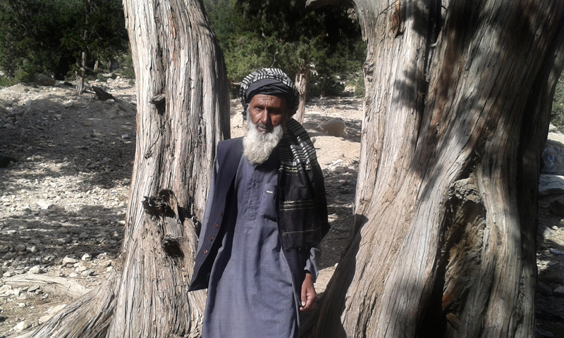 Haji Abdul Qayyum, who has spent his whole life protecting the juniper forest. — Photos provided by author.