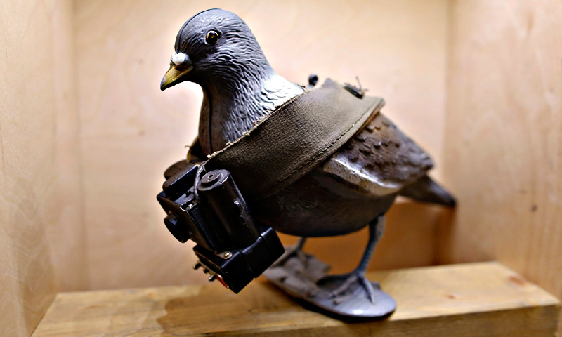 A mock-up of a pigeon with a small camera is seen on display at the 'Top Secret' Spy Museum in Oberhausen.