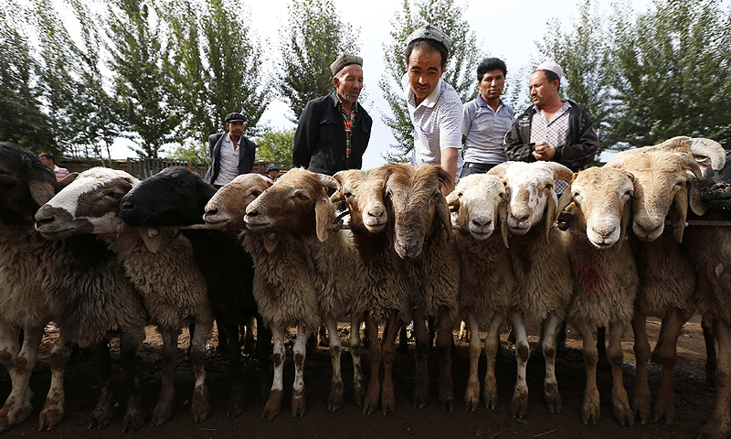 Ethnic Uighur customers select goats at a fair on a street in Aksu, Xinjiang Uighur Autonomous Region July 21, 2013.—Photo by Reuters