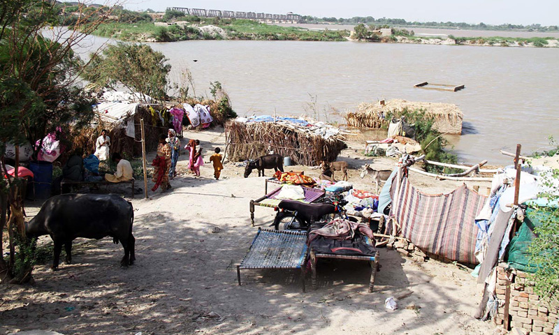 Despite the flooding of River Indus and the impending danger, residents of the river belt are not yet prepared to leave their homes. – Online photo