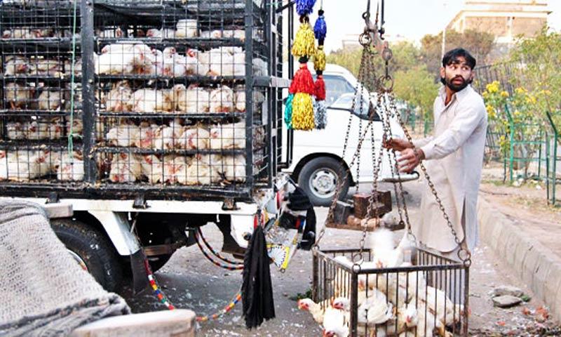 В Пакистане падают прибыли птицеводов