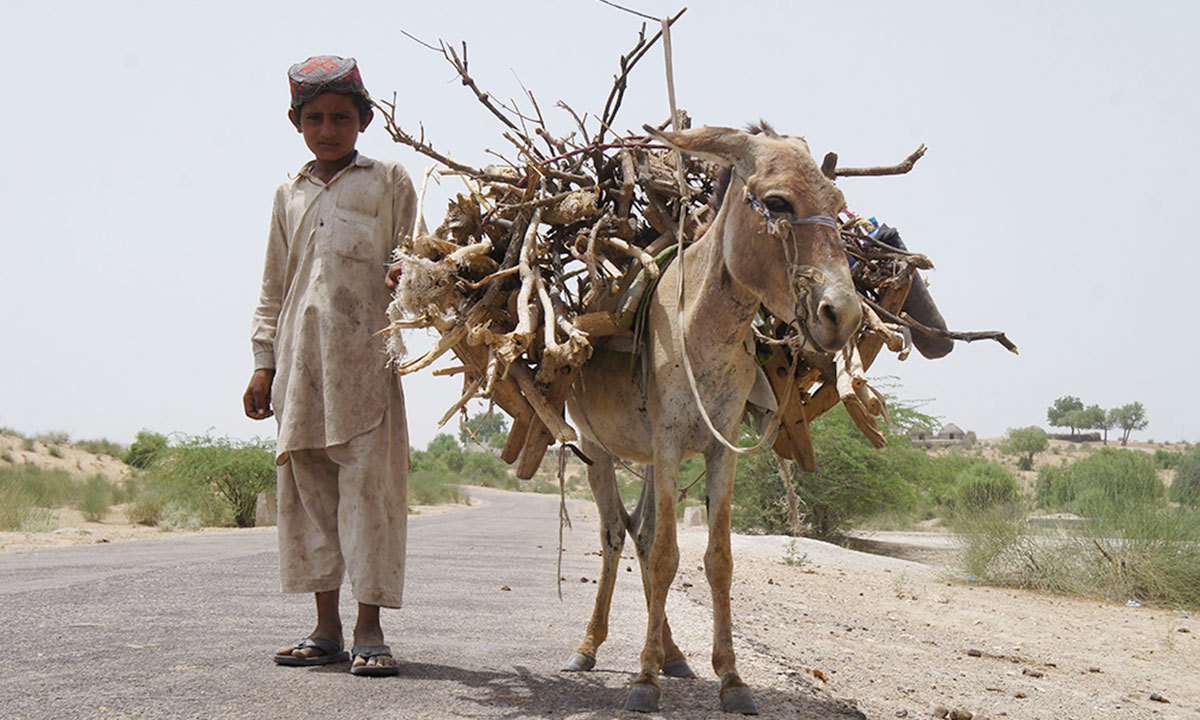A boy collecting firewood for domestic needs in Tharparkar, Sindh. – Photo by Emmanuel Guddu