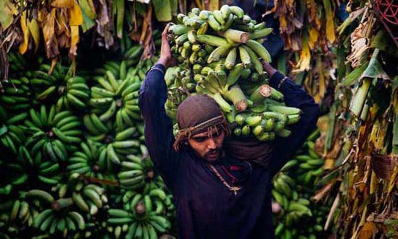 A Pakistani laborer unloads bananas from a truck at a wholesale fruit and vegetable market in Islamabad. — File photo/AP