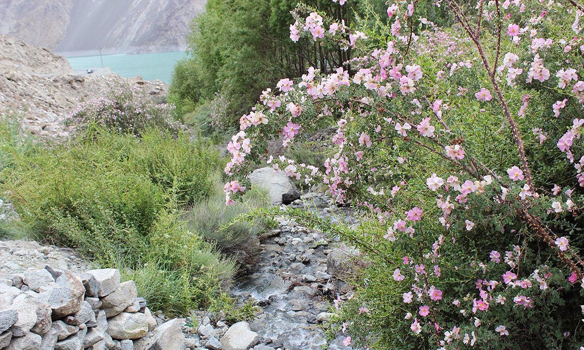 July and August are the best months to see wildflowers blooming and to go trout fishing. —Photo by Zofeen Ebrahim