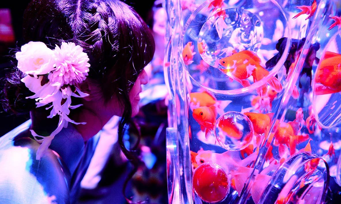 "A young woman wearing the summer Kimono, ""Yukata"" watches goldfish during the press preview of ""Eco Edo Nihonbashi Art Aquarium 2014"" exhibition in Tokyo. -AFP Photo"