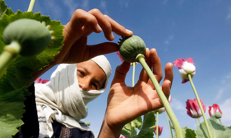 """Senators believe the growers """"have some strong backing"""".—File photo"""