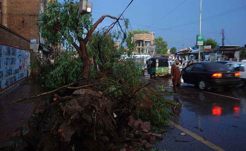 After a very heavy downpour a fallen tree is seen blocking a street at Stadium Road in Peshawar on Friday, August 15, 2014.— Photo by PPI