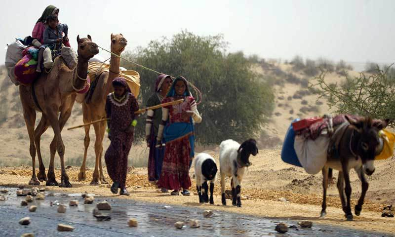 Villagers lead livestock from the drought-hit Tharparkar district in southern Sindh province on March 11, 2014.—AFP