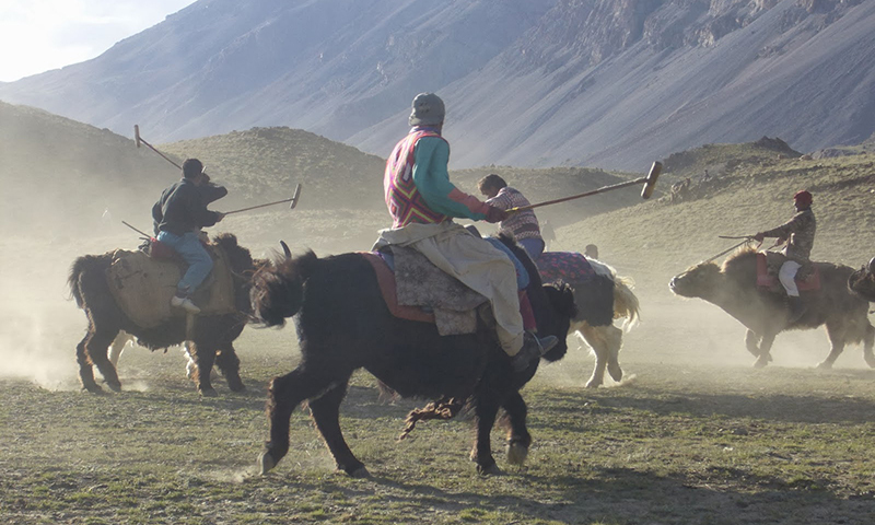 A view of yak polo match