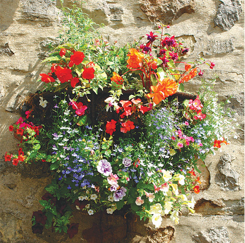 Lobelias, begonias and trailing petunias are great