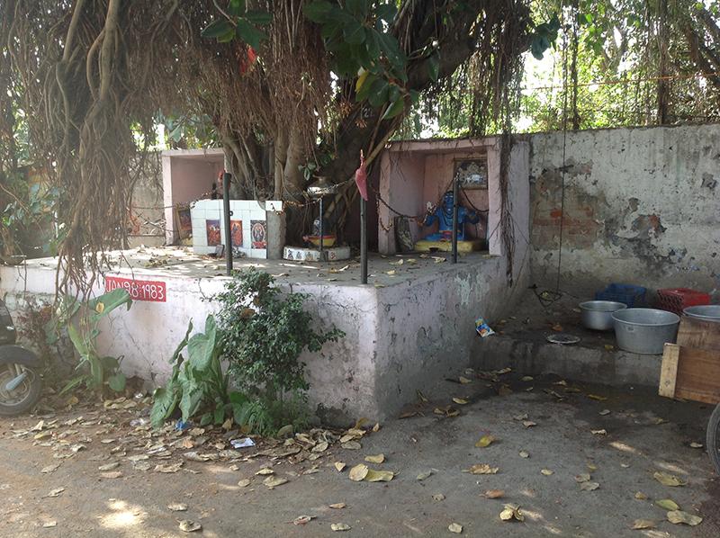 پرانے درختوں کے نیچے کوئی نا کوئی مذہبی ڈیرہ ضرور ہوتا ہے۔
