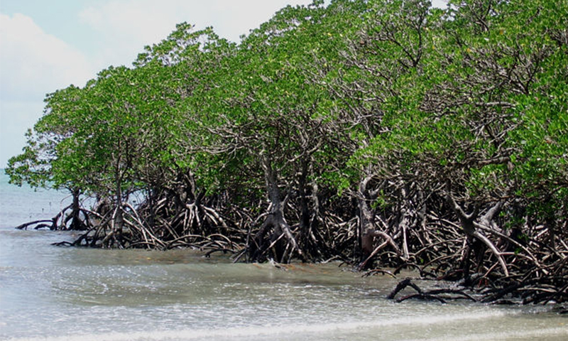490 acres of mangroves across the Gizri creek will be incorporated into DHA's ever-expanding boundaries. - Photo by AFP