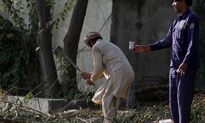 A man cutting tree branches in Islamabad while a private guard watches.  - INP