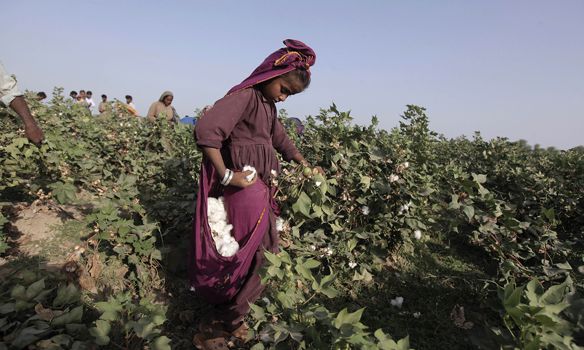 cotton plant girls Download cotton fields images and photos over 2,913 cotton fields pictures to choose from, with no signup needed download in under 30 seconds.