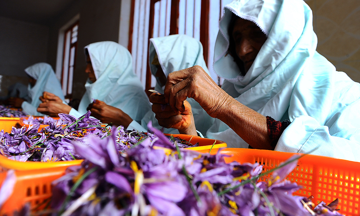 Workers cleaning and sorting saffron flowers at a cleaning centre in the Ghoriyan District of Herat. - AFP