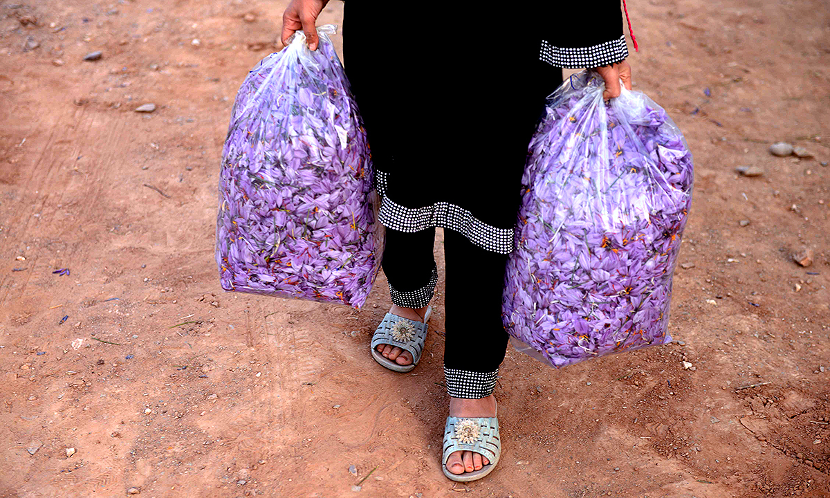 A worker carrying saffron flowers. - AFP