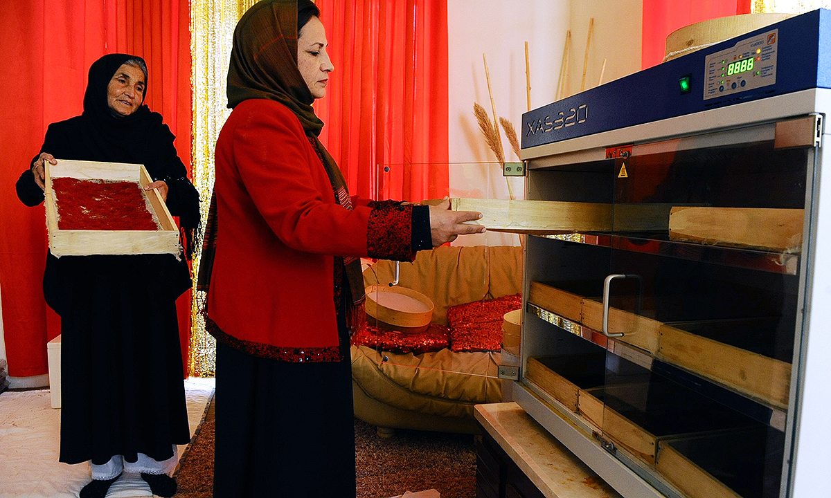 Afghan Saffron Womenís Association Manager Sima Ghoriyani (R) dries saffron in an oven. - AFP