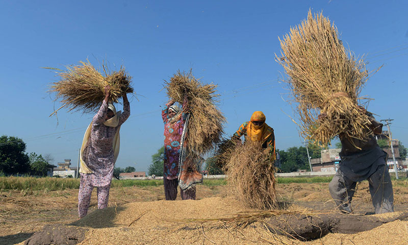 In this photo, women work in an agricultural field in Lahore. — AFP/File