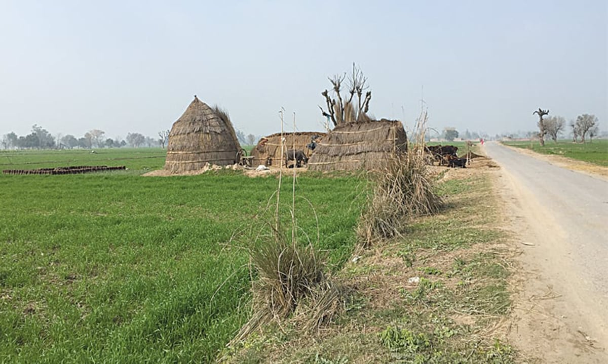Called Behak, this is a temporary farm house built in the fields after the month of Poh (bearing extreme cold). The huts are called Chhann.