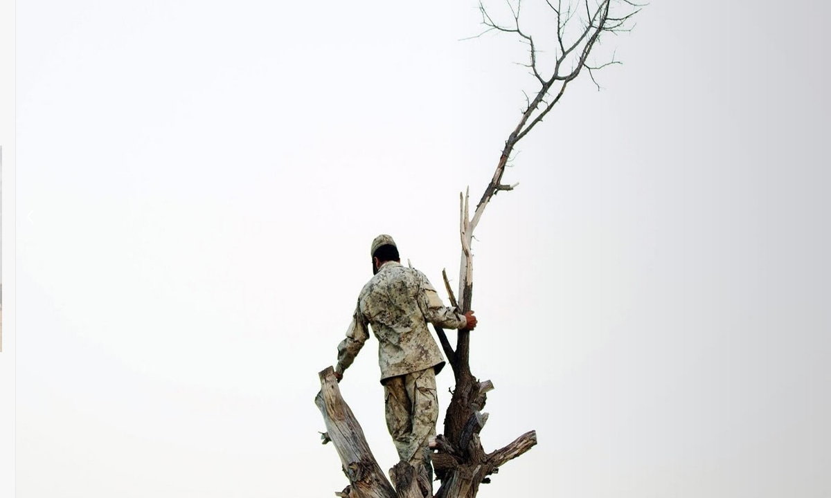 An Afghan National Security Force soldier stands on a tree.