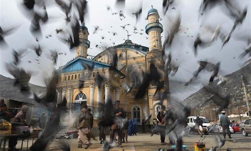 Pigeons fly at the Shahi Doshamshira mosque where an Afghan woman was beaten to death and her body set alight by a mob, in Kabul on March 20, 2015  ─AFP