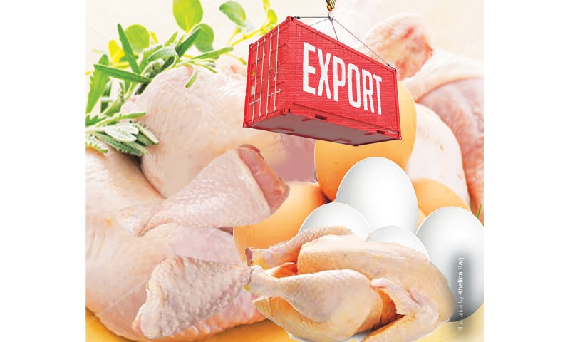 Export potential of poultry products - Newspaper - DAWN COM