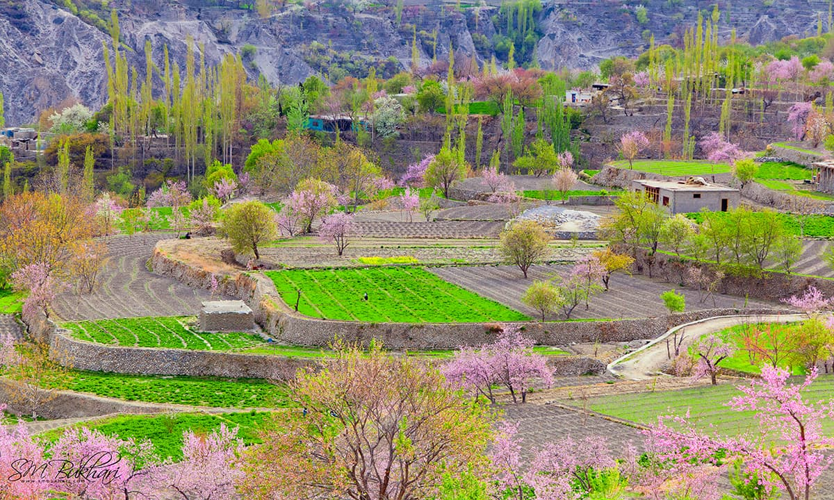Hunza valley a whole new spectrum of colours pakistan dawn blossom in hunza izmirmasajfo
