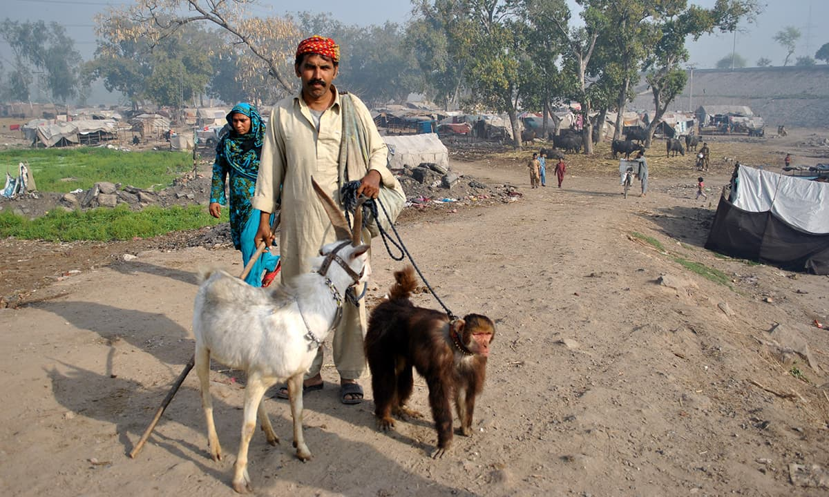 On the way to work, monkey jugglers Riaz and Arshad have to walk all day to collect Rs 400-500.