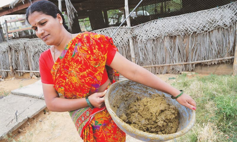 An Indian woman carries cow dung to be used for producing biogas in  a village.—AP
