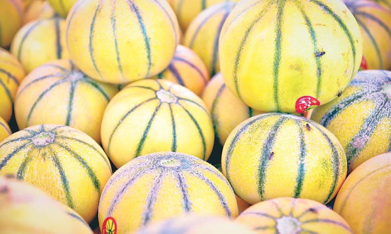 Cantaloupe or the common striped kherbooza as we know it here.
