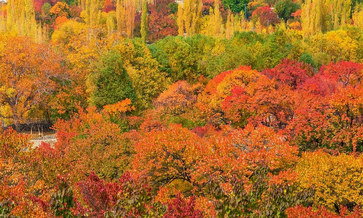 تھلے وادی میں خزاں کے خوبصورت رنگ — فوٹو سید مہدی بخاری