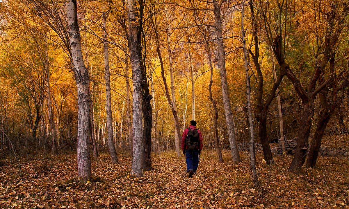 خپلو کا جنگل — فوٹو سید مہدی بخاری
