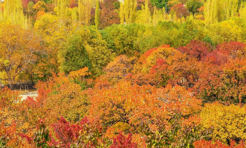 Autumn in Thally valley. — S.M.Bukhari