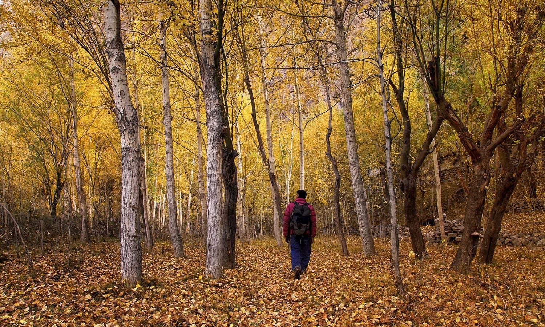 In a jungle in Khaplu. — S.M.Bukhari